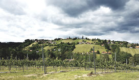 Weinberge in der Weststeiermark