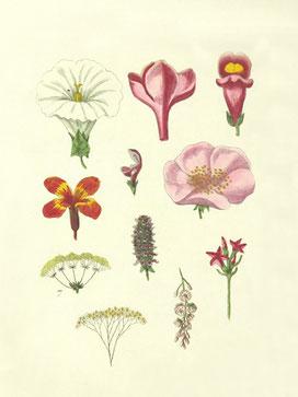 Blüten Vintage poster