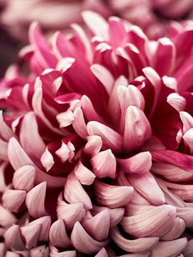 Flowerpower rose