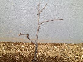 風水 ガーデニング 木の向き2