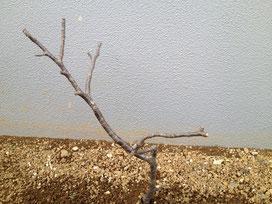 風水 ガーデニング 木の向き1