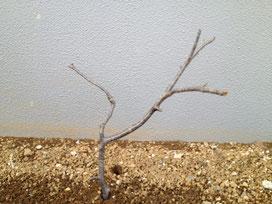 風水 ガーデニング 木の向き3