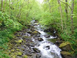 Steine im Fluss; MediTrigon