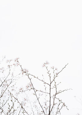 photo by Masaaki Komori