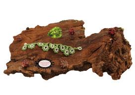 bracelet au crochet de la collection Valicia, un bijou textile réalisé dans un coton vert forêt et Rocailles de Bohème blanches, une délicate dentelle hypo allergique à glisser autour de votre poignet