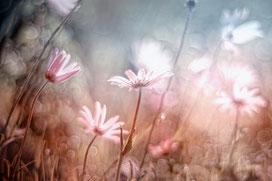 Blüten in der Morgensonne