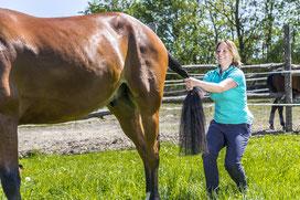 Dehnung Wirbelsäule Pferd