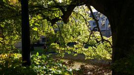 Im Blätterwald...