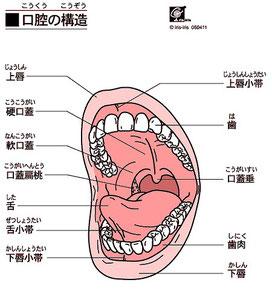 歯茎のかゆみはあごのゆがみから
