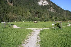 Baumkreis Vils/Tirol