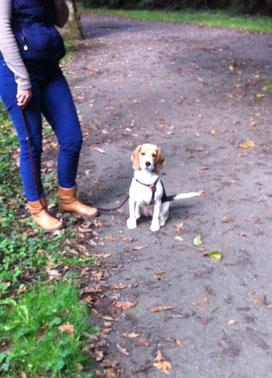 Fanny, Beagle