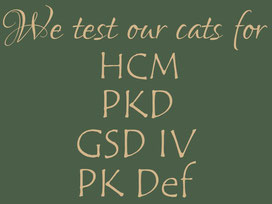 We test our cats for: HCM, PKD, GSD IV, PK def