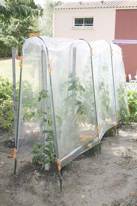©Nortene, Tomato Film, le film de forçage en polyéthylène pour tunnel haut