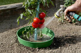 ©Nortene, Waterbord, la bordure d'arrosage pour la culture de tomate.