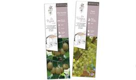 Javoy Pépinière, gamme de petits fruits