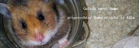 """Goldis sweet home"" von Tanja aus Köln"