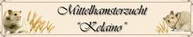 """""""Hamsterzucht Kelaino"""" von Jessica aus Lorsch"""