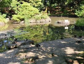 ●公園のあちこちに池があり鴨が昼寝をしていました