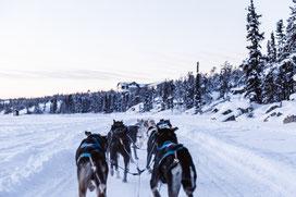 Winterurlaub in Schweden Lappland - Husky Tour, Hundeschlitten Tour