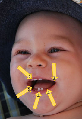 Wie viele Zähne hat ein Kind