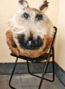 Géza Szöllősi, My Pets, Taxidermy