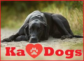 Hundeschule, Schule, Hunde, Berlin, Hunderziehung, Hund, Gehorsam, Hundetraining