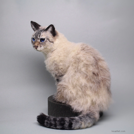 羊毛 シャム猫 needlefelt  siamese cat