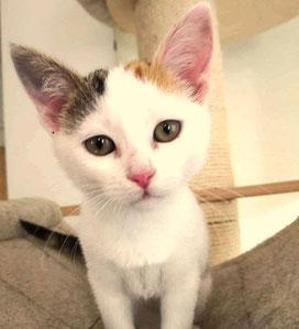 Katze Rosa