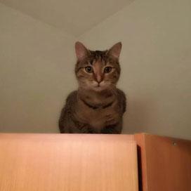 Katze Molly