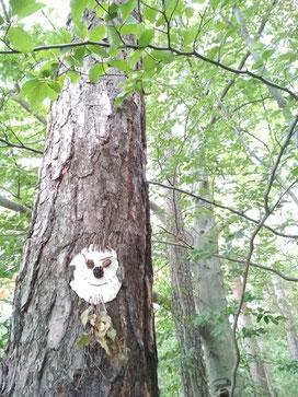 """Der """"Heilwald"""" - eine uralte Idee mit neuem Aufwind"""