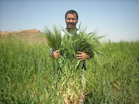 Super récolte de céréales