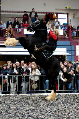 Pferdemesse für Eifel, Westerwald, Hunsrück und Taunus