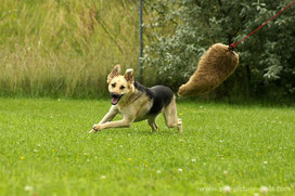 Hunde müssen jagen