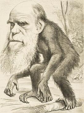 1871年雑誌に載ったダーウィンを揶揄する風刺画