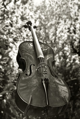 Cello, Natur, Es gibt Dinge, die man nicht versteht, Simon, Gedenkseite