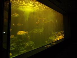 薄暗い照明になっている水槽