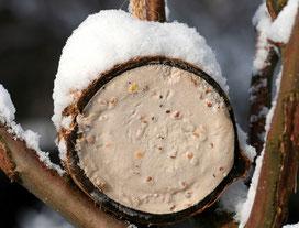 Energiereiche Samen und Nüsse sind am besten geeignet. Foto: NABU/H. May