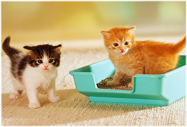 Litter Box 101: Preventing and solving litter box problems for maine coon cats