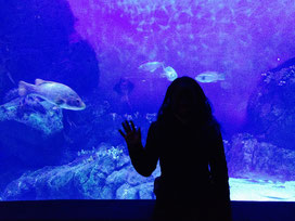 Me at Plymouth Aquarium!