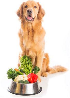 Barfen Sie mit Ra-Wo Ihren Hund gesund!