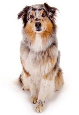 Stöbern Sie in unserem großen Angebot von Hundefutter und Zubehör
