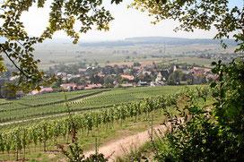 Weinlehrpfad Tannenkircher Steingässle-Weg