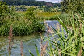 Lachsbesatz Umgehungsgewässer Leibstadt Juni 2021. (Foto PC)