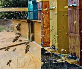 Bienenstöcke [zum Vergrößern bitte anklicken]