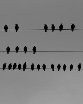 Vögel, Stromleitung, ©Claudia Dorka