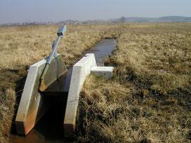 """NABU-Projekt """"Naturschutz in der Praxis im Federseemoor"""""""