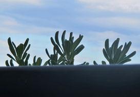 16. Juli 2014 - Ueber den Rand schauen. Auch Pflanzen können neugierig sein.