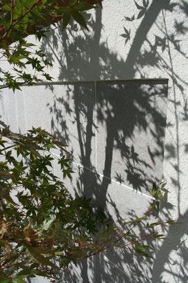 門塀に写るイロハモミジの影。写りこむ影も味になる。