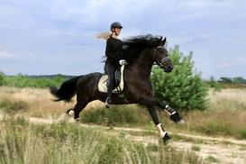 Paardenfotografie - sierfotografie - hondenfotografie - Renkum - Moweena - fotograaf - natuur