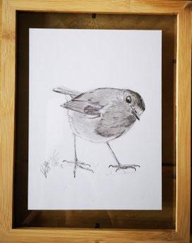 4. Robin...Pencel drawing 1 Potlood tekening ingelijst tussen twee glasplaten.